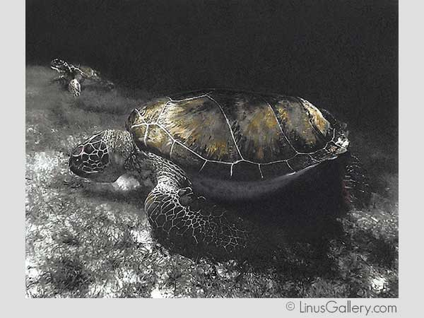 fine art gallery california 25 Animal Artist John Wissler | Painted Turtles